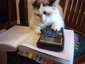 Working your tail off makes more sense if you have a tail...like this cat...using a graphing calculator!