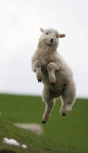 What is better than a human jumping for joy? A sheep jumping for joy!