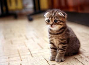 I hate posting something with no pictures, so I thought you might enjoy a forlorn kitten...